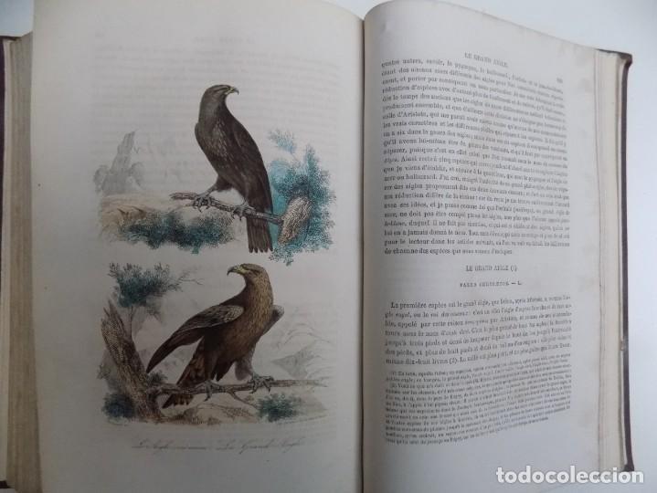 Libros antiguos: LIBRERIA GHOTICA. EXCEPCIONAL OBRA FRANCESA DE BUFFON.1852. OBRA COMPLETA 9 VOLUMENES FOLIO.GRABADOS - Foto 33 - 183743393
