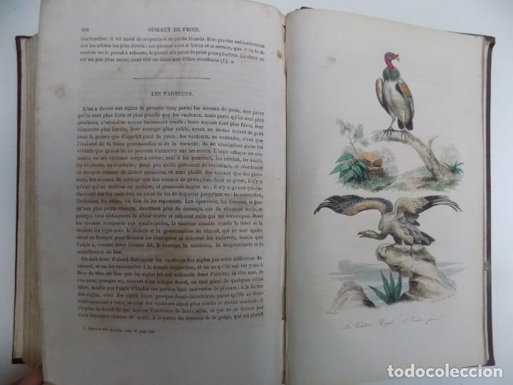 Libros antiguos: LIBRERIA GHOTICA. EXCEPCIONAL OBRA FRANCESA DE BUFFON.1852. OBRA COMPLETA 9 VOLUMENES FOLIO.GRABADOS - Foto 34 - 183743393