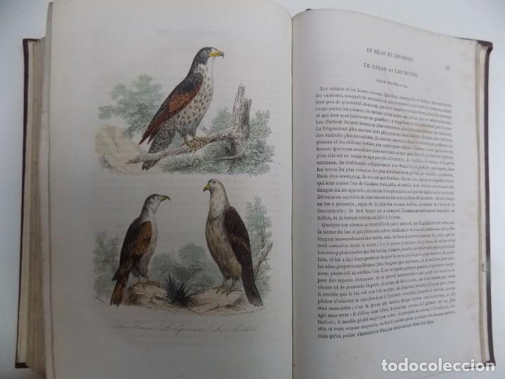 Libros antiguos: LIBRERIA GHOTICA. EXCEPCIONAL OBRA FRANCESA DE BUFFON.1852. OBRA COMPLETA 9 VOLUMENES FOLIO.GRABADOS - Foto 35 - 183743393