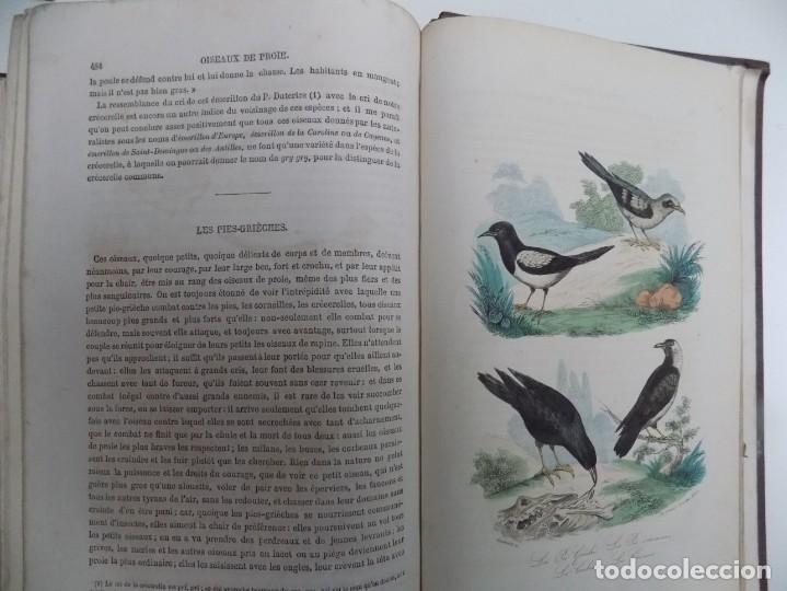 Libros antiguos: LIBRERIA GHOTICA. EXCEPCIONAL OBRA FRANCESA DE BUFFON.1852. OBRA COMPLETA 9 VOLUMENES FOLIO.GRABADOS - Foto 36 - 183743393