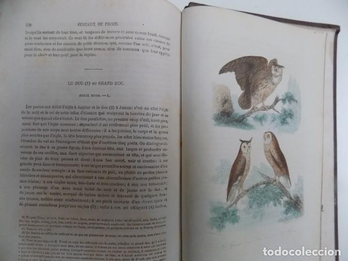 Libros antiguos: LIBRERIA GHOTICA. EXCEPCIONAL OBRA FRANCESA DE BUFFON.1852. OBRA COMPLETA 9 VOLUMENES FOLIO.GRABADOS - Foto 37 - 183743393