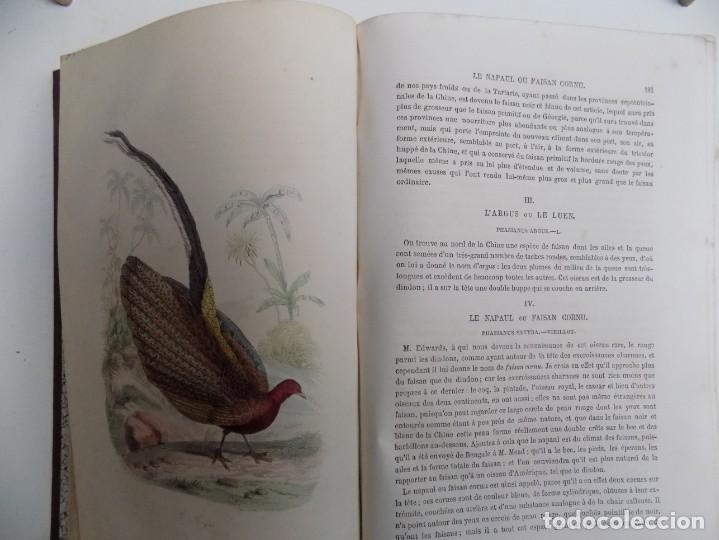 Libros antiguos: LIBRERIA GHOTICA. EXCEPCIONAL OBRA FRANCESA DE BUFFON.1852. OBRA COMPLETA 9 VOLUMENES FOLIO.GRABADOS - Foto 38 - 183743393