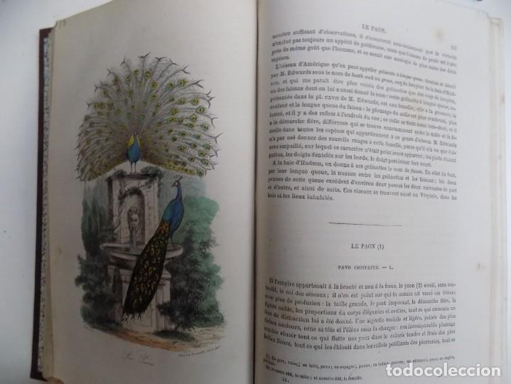 Libros antiguos: LIBRERIA GHOTICA. EXCEPCIONAL OBRA FRANCESA DE BUFFON.1852. OBRA COMPLETA 9 VOLUMENES FOLIO.GRABADOS - Foto 39 - 183743393