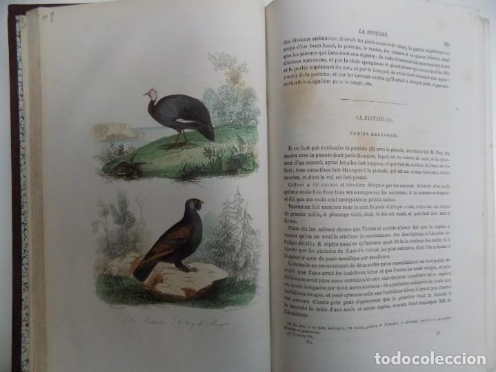Libros antiguos: LIBRERIA GHOTICA. EXCEPCIONAL OBRA FRANCESA DE BUFFON.1852. OBRA COMPLETA 9 VOLUMENES FOLIO.GRABADOS - Foto 40 - 183743393