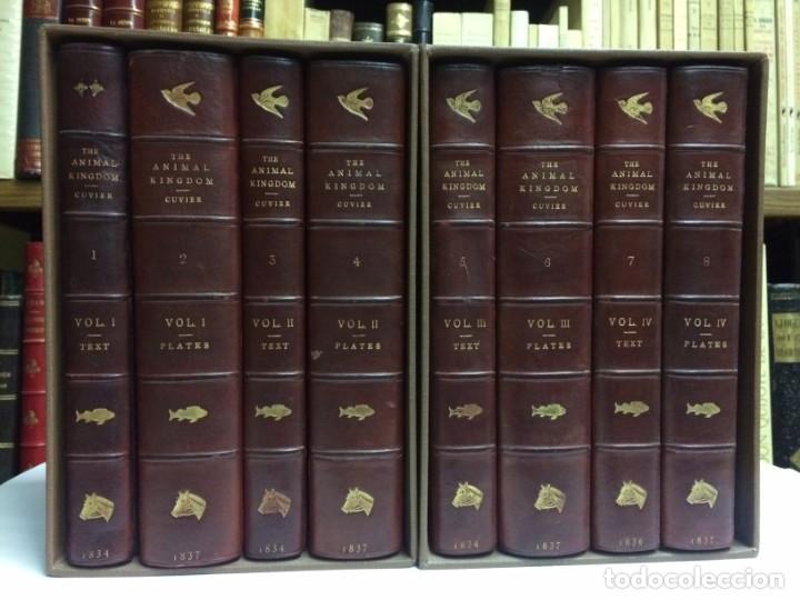 AÑO 1834-1837 - GEORGES CUVIER THE ANIMAL KINGDOM - REINO ANIMAL MÁS DE 700 LITOGRAFÍAS COLOREADAS (Libros Antiguos, Raros y Curiosos - Ciencias, Manuales y Oficios - Bilogía y Botánica)
