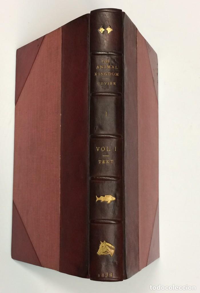 Libros antiguos: AÑO 1834-1837 - GEORGES CUVIER THE ANIMAL KINGDOM - REINO ANIMAL MÁS DE 700 LITOGRAFÍAS COLOREADAS - Foto 2 - 183779962