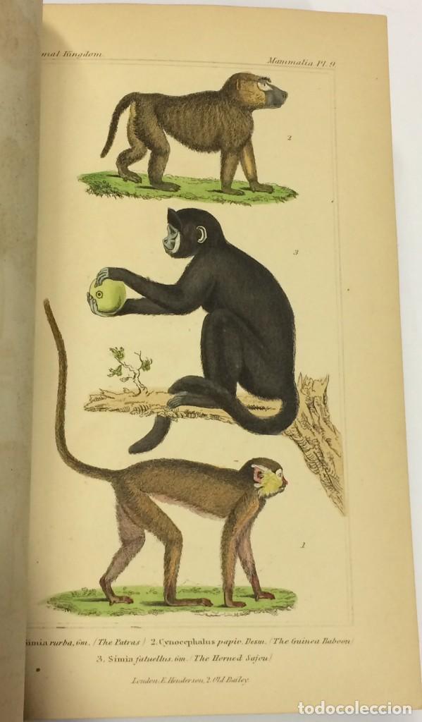 Libros antiguos: AÑO 1834-1837 - GEORGES CUVIER THE ANIMAL KINGDOM - REINO ANIMAL MÁS DE 700 LITOGRAFÍAS COLOREADAS - Foto 5 - 183779962