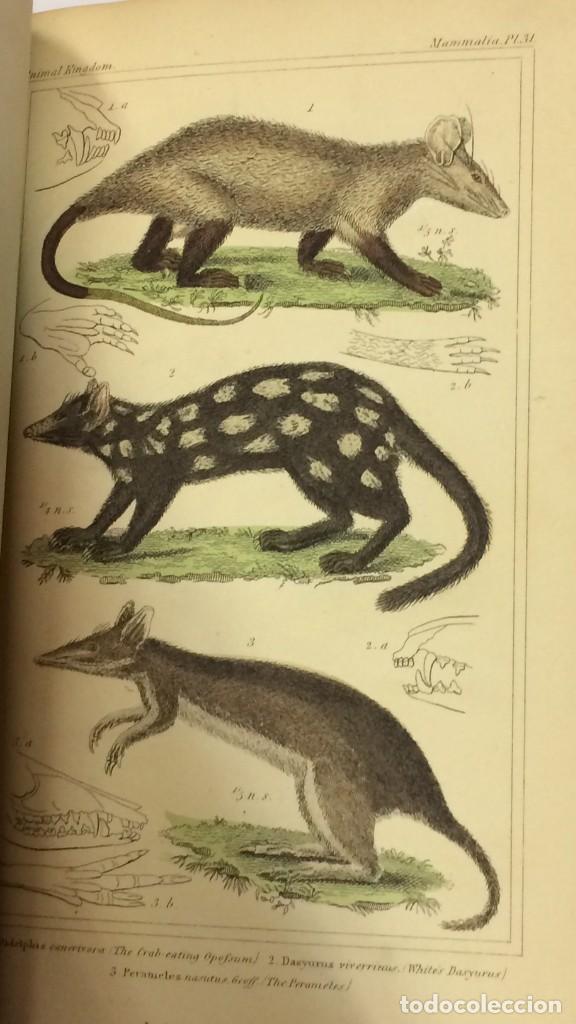 Libros antiguos: AÑO 1834-1837 - GEORGES CUVIER THE ANIMAL KINGDOM - REINO ANIMAL MÁS DE 700 LITOGRAFÍAS COLOREADAS - Foto 6 - 183779962