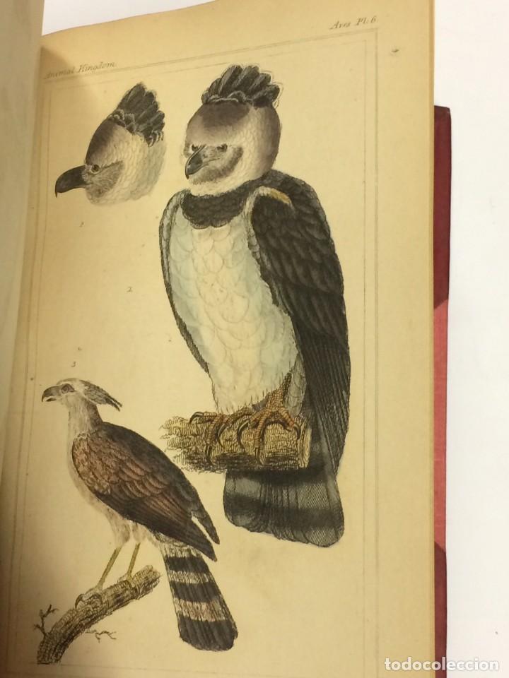 Libros antiguos: AÑO 1834-1837 - GEORGES CUVIER THE ANIMAL KINGDOM - REINO ANIMAL MÁS DE 700 LITOGRAFÍAS COLOREADAS - Foto 7 - 183779962
