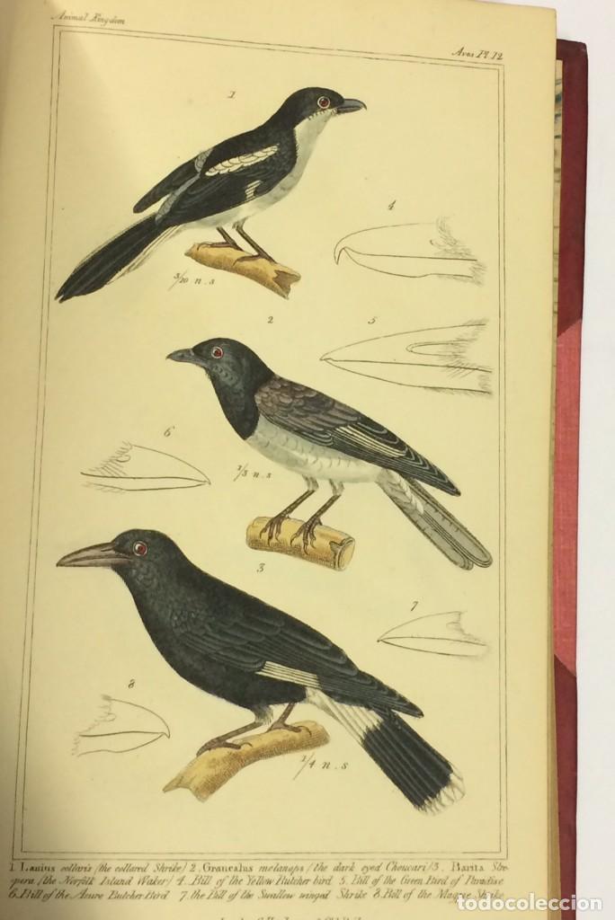 Libros antiguos: AÑO 1834-1837 - GEORGES CUVIER THE ANIMAL KINGDOM - REINO ANIMAL MÁS DE 700 LITOGRAFÍAS COLOREADAS - Foto 8 - 183779962