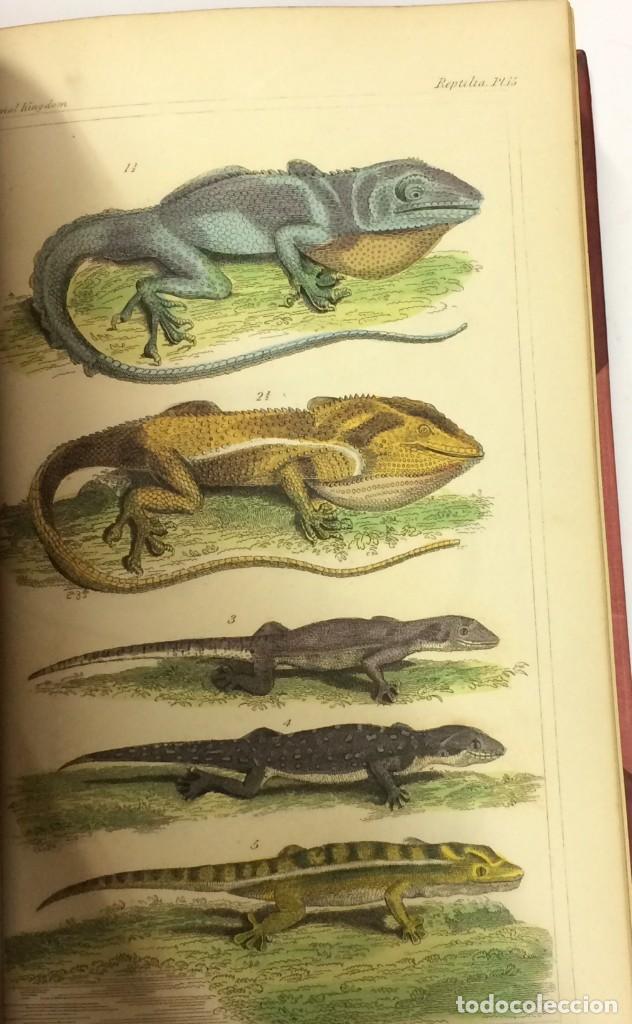 Libros antiguos: AÑO 1834-1837 - GEORGES CUVIER THE ANIMAL KINGDOM - REINO ANIMAL MÁS DE 700 LITOGRAFÍAS COLOREADAS - Foto 10 - 183779962