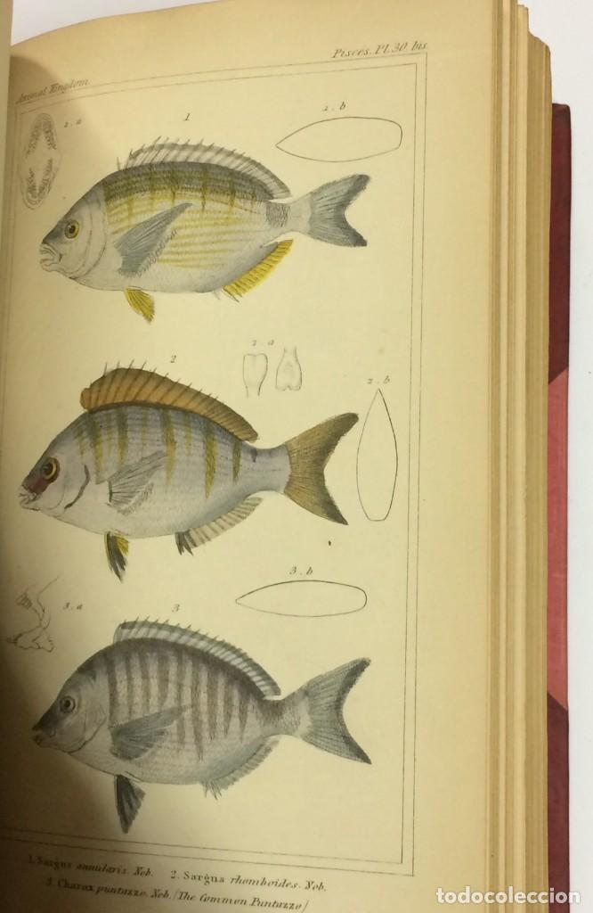 Libros antiguos: AÑO 1834-1837 - GEORGES CUVIER THE ANIMAL KINGDOM - REINO ANIMAL MÁS DE 700 LITOGRAFÍAS COLOREADAS - Foto 12 - 183779962