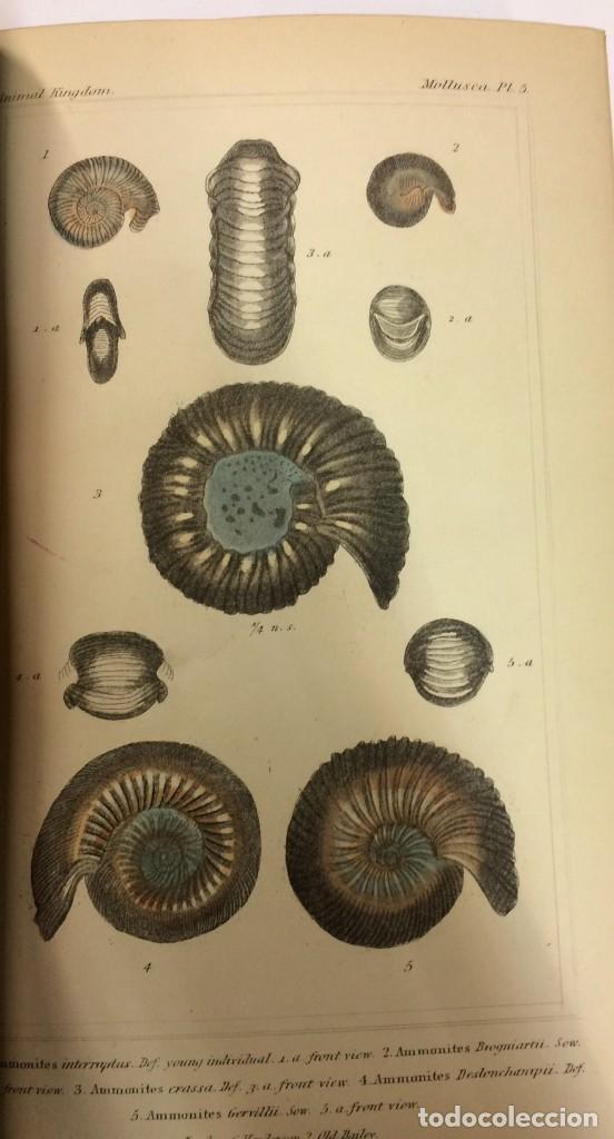 Libros antiguos: AÑO 1834-1837 - GEORGES CUVIER THE ANIMAL KINGDOM - REINO ANIMAL MÁS DE 700 LITOGRAFÍAS COLOREADAS - Foto 13 - 183779962