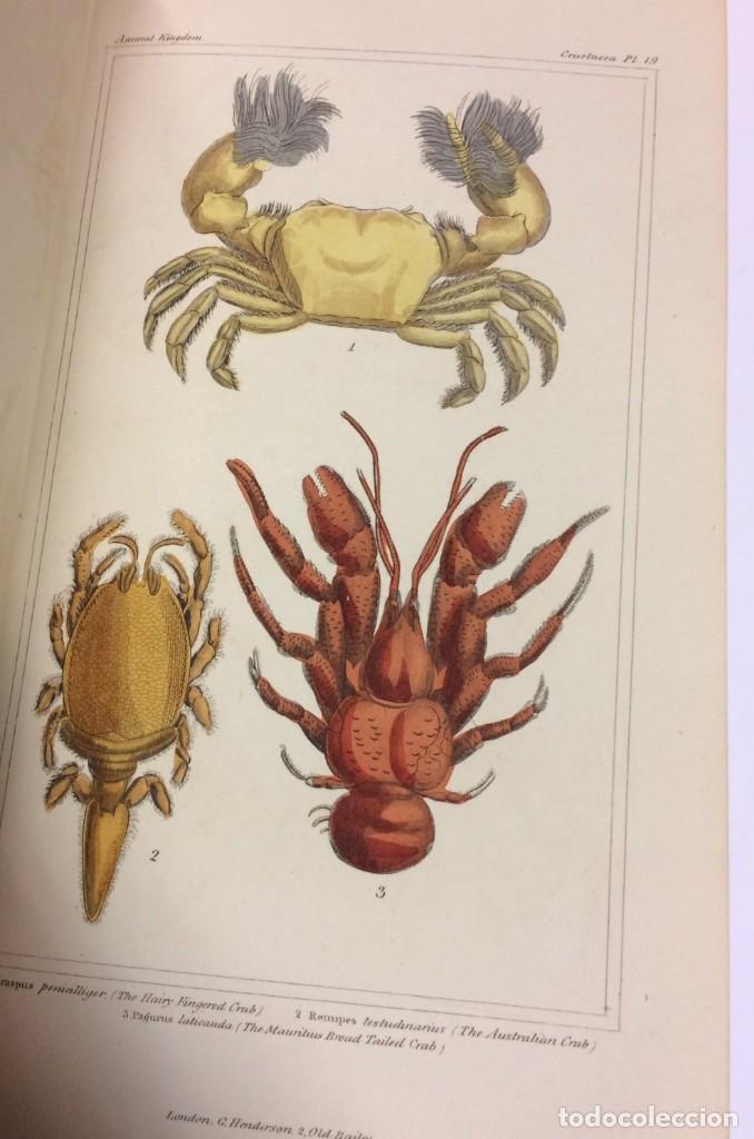 Libros antiguos: AÑO 1834-1837 - GEORGES CUVIER THE ANIMAL KINGDOM - REINO ANIMAL MÁS DE 700 LITOGRAFÍAS COLOREADAS - Foto 16 - 183779962