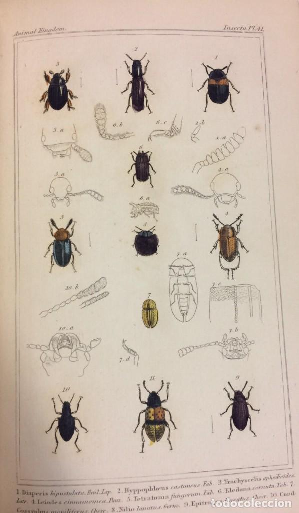 Libros antiguos: AÑO 1834-1837 - GEORGES CUVIER THE ANIMAL KINGDOM - REINO ANIMAL MÁS DE 700 LITOGRAFÍAS COLOREADAS - Foto 17 - 183779962