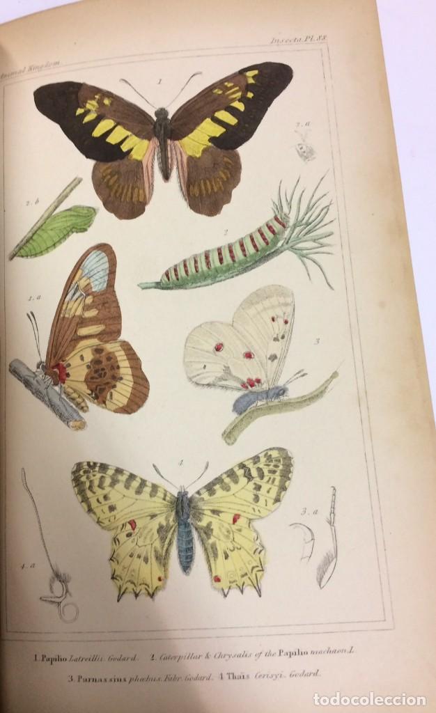 Libros antiguos: AÑO 1834-1837 - GEORGES CUVIER THE ANIMAL KINGDOM - REINO ANIMAL MÁS DE 700 LITOGRAFÍAS COLOREADAS - Foto 18 - 183779962