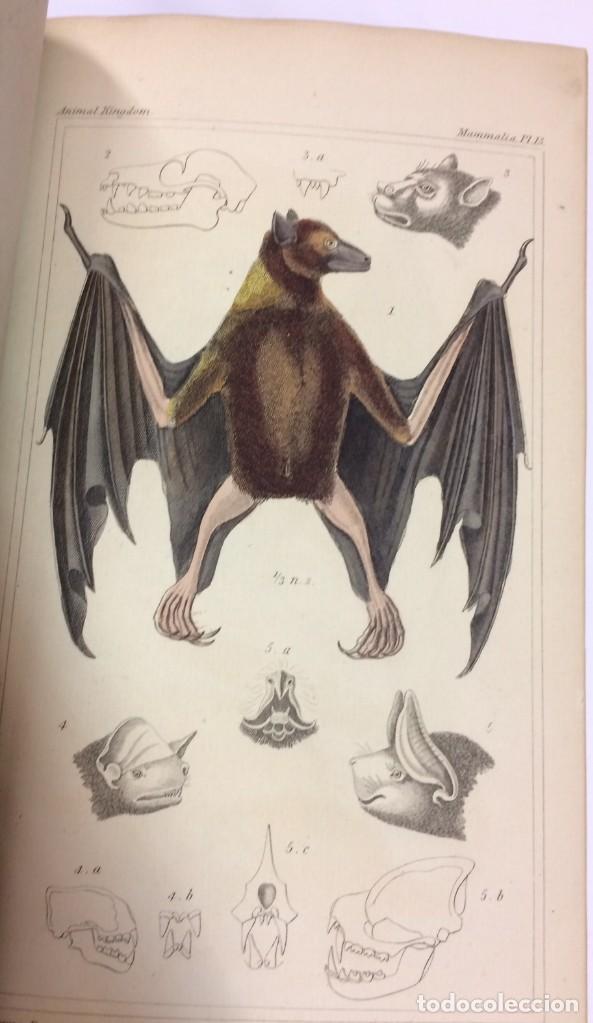 Libros antiguos: AÑO 1834-1837 - GEORGES CUVIER THE ANIMAL KINGDOM - REINO ANIMAL MÁS DE 700 LITOGRAFÍAS COLOREADAS - Foto 19 - 183779962