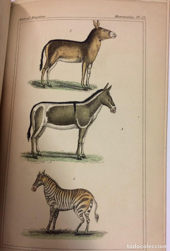 Libros antiguos: AÑO 1834-1837 - GEORGES CUVIER THE ANIMAL KINGDOM - REINO ANIMAL MÁS DE 700 LITOGRAFÍAS COLOREADAS - Foto 21 - 183779962