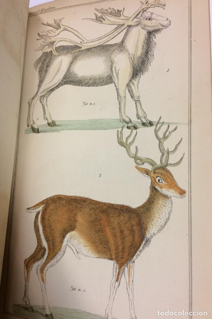 Libros antiguos: AÑO 1834-1837 - GEORGES CUVIER THE ANIMAL KINGDOM - REINO ANIMAL MÁS DE 700 LITOGRAFÍAS COLOREADAS - Foto 22 - 183779962