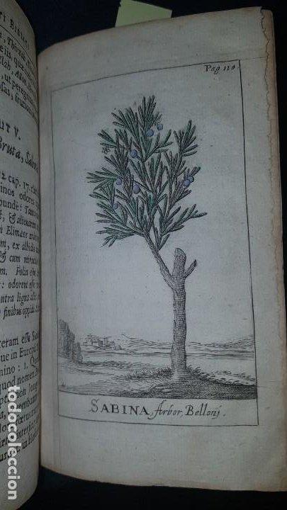 Libros antiguos: BOTÁNICA EN LA BIBLIA - Arboretum Biblicum, In quo Arbores & fructices - Foto 3 - 183862835