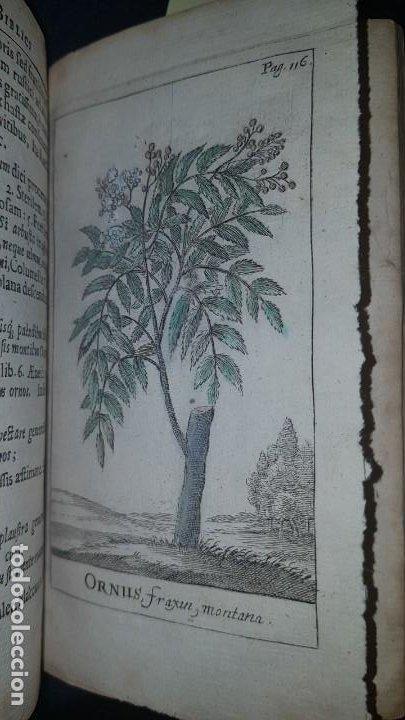 Libros antiguos: BOTÁNICA EN LA BIBLIA - Arboretum Biblicum, In quo Arbores & fructices - Foto 4 - 183862835