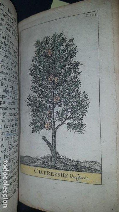 Libros antiguos: BOTÁNICA EN LA BIBLIA - Arboretum Biblicum, In quo Arbores & fructices - Foto 5 - 183862835