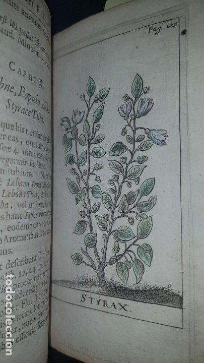 Libros antiguos: BOTÁNICA EN LA BIBLIA - Arboretum Biblicum, In quo Arbores & fructices - Foto 22 - 183862835