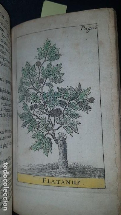 Libros antiguos: BOTÁNICA EN LA BIBLIA - Arboretum Biblicum, In quo Arbores & fructices - Foto 23 - 183862835