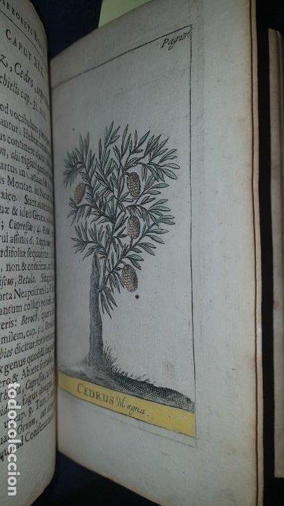 Libros antiguos: BOTÁNICA EN LA BIBLIA - Arboretum Biblicum, In quo Arbores & fructices - Foto 24 - 183862835