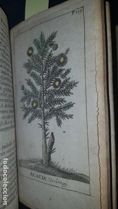 Libros antiguos: BOTÁNICA EN LA BIBLIA - Arboretum Biblicum, In quo Arbores & fructices - Foto 25 - 183862835