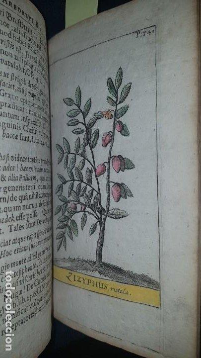 Libros antiguos: BOTÁNICA EN LA BIBLIA - Arboretum Biblicum, In quo Arbores & fructices - Foto 6 - 183862835