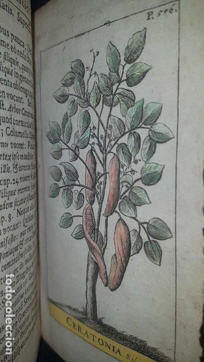 Libros antiguos: BOTÁNICA EN LA BIBLIA - Arboretum Biblicum, In quo Arbores & fructices - Foto 27 - 183862835