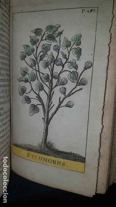 Libros antiguos: BOTÁNICA EN LA BIBLIA - Arboretum Biblicum, In quo Arbores & fructices - Foto 28 - 183862835