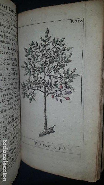 Libros antiguos: BOTÁNICA EN LA BIBLIA - Arboretum Biblicum, In quo Arbores & fructices - Foto 29 - 183862835