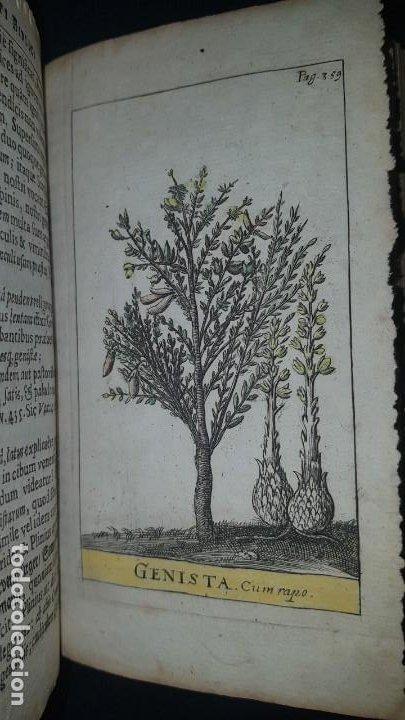 Libros antiguos: BOTÁNICA EN LA BIBLIA - Arboretum Biblicum, In quo Arbores & fructices - Foto 31 - 183862835