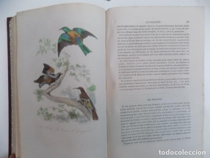 Libros antiguos: LIBRERIA GHOTICA. EXCEPCIONAL OBRA FRANCESA DE BUFFON.1852. OBRA COMPLETA 9 VOLUMENES FOLIO.GRABADOS - Foto 42 - 183743393