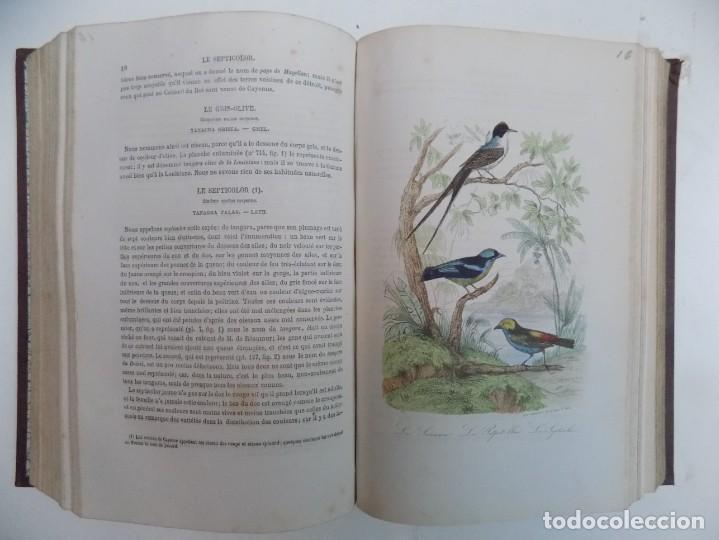 Libros antiguos: LIBRERIA GHOTICA. EXCEPCIONAL OBRA FRANCESA DE BUFFON.1852. OBRA COMPLETA 9 VOLUMENES FOLIO.GRABADOS - Foto 43 - 183743393
