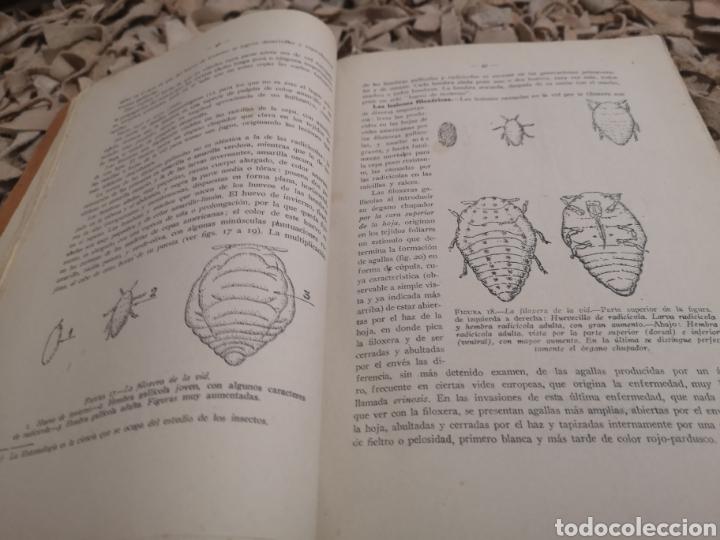 Libros antiguos: TRATADO PRACTICO DE VITICULTURA Y ENOLOGIA ESPAÑOLAS- TOMO I -1942 - Foto 3 - 187516822