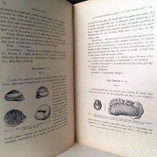 Libros antiguos: EL MIOCENO CONTINENTAL IBÉRICO Y SU FAUNA MALACOLÓGICA (CUENCAS ESPAÑOLAS, MOLUSCOS, CONCHAS.... Lote 190069455