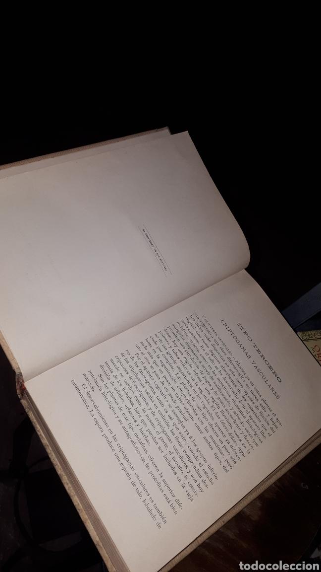 Libros antiguos: HISTORIA NATURAL BOTANICA ODON DE BUEN MONTANER Y SIMON 1893 - Foto 2 - 191303796