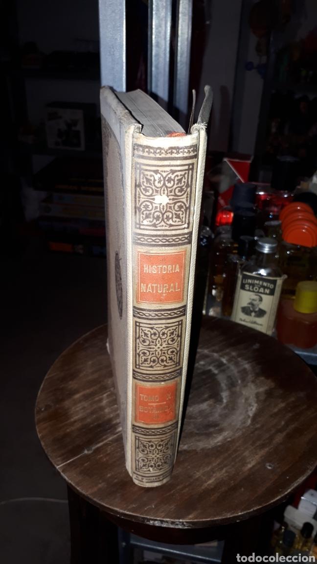 Libros antiguos: HISTORIA NATURAL BOTANICA ODON DE BUEN MONTANER Y SIMON 1893 - Foto 4 - 191303796