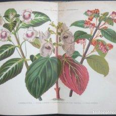 Libros antiguos: 1891. LIBRO ANTIGUO DE BOTÁNICA - GRABADOS DE FLORES Y PLANTAS - CROMOLITOGRAFÍAS - HISTORIA NATURAL. Lote 194765482