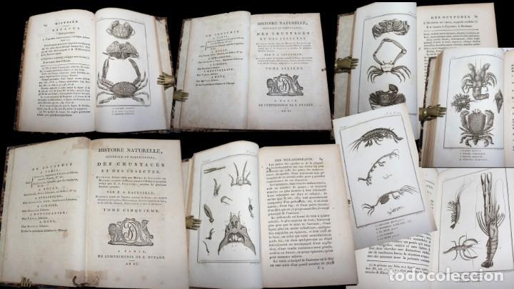 Libros antiguos: Latreille - Buffon. Histoire Naturelle Crustacés et Insectes. 11 vols. 81 grabados. Ver condiciones - Foto 4 - 195243116