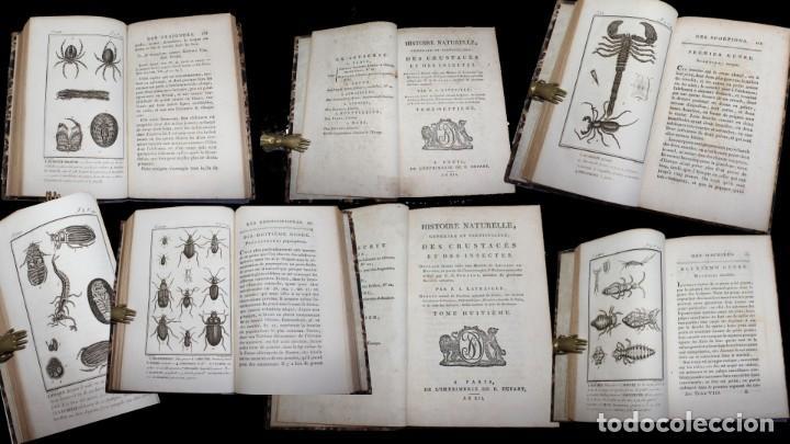 Libros antiguos: Latreille - Buffon. Histoire Naturelle Crustacés et Insectes. 11 vols. 81 grabados. Ver condiciones - Foto 5 - 195243116