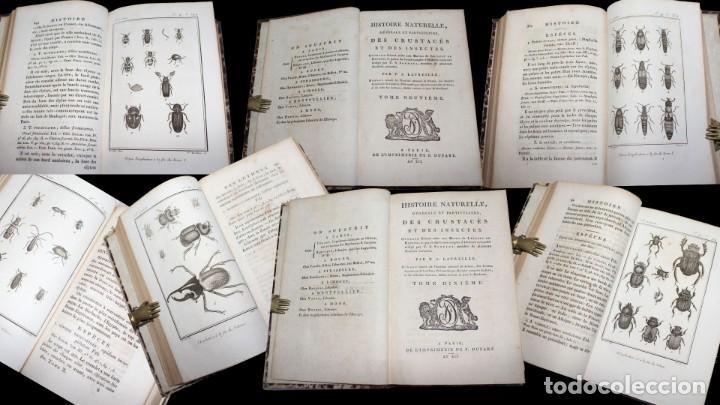 Libros antiguos: Latreille - Buffon. Histoire Naturelle Crustacés et Insectes. 11 vols. 81 grabados. Ver condiciones - Foto 6 - 195243116