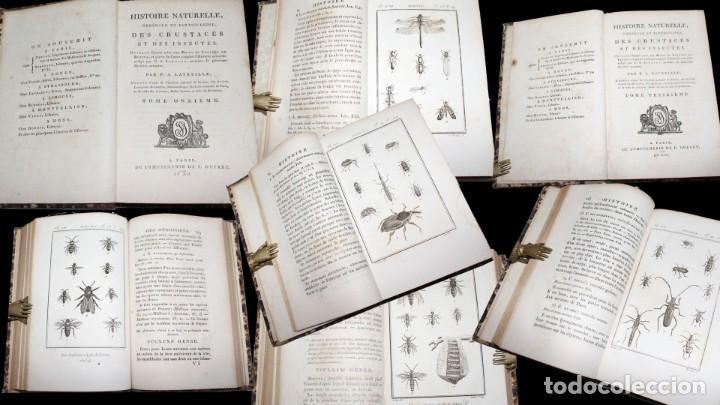 Libros antiguos: Latreille - Buffon. Histoire Naturelle Crustacés et Insectes. 11 vols. 81 grabados. Ver condiciones - Foto 7 - 195243116