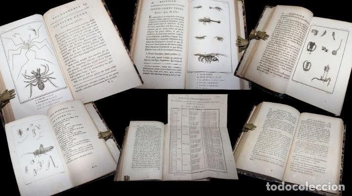 Libros antiguos: Latreille - Buffon. Histoire Naturelle Crustacés et Insectes. 11 vols. 81 grabados. Ver condiciones - Foto 8 - 195243116