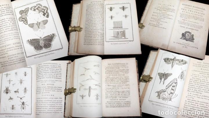 Libros antiguos: Latreille - Buffon. Histoire Naturelle Crustacés et Insectes. 11 vols. 81 grabados. Ver condiciones - Foto 9 - 195243116