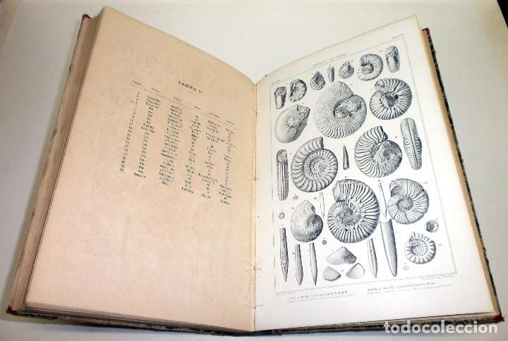 Libros antiguos: VILANOVA Y PIERA, Juan. Ensayo de Descripción Geognóstica de la Provincia de Teruel... 1863. - Foto 9 - 195280491