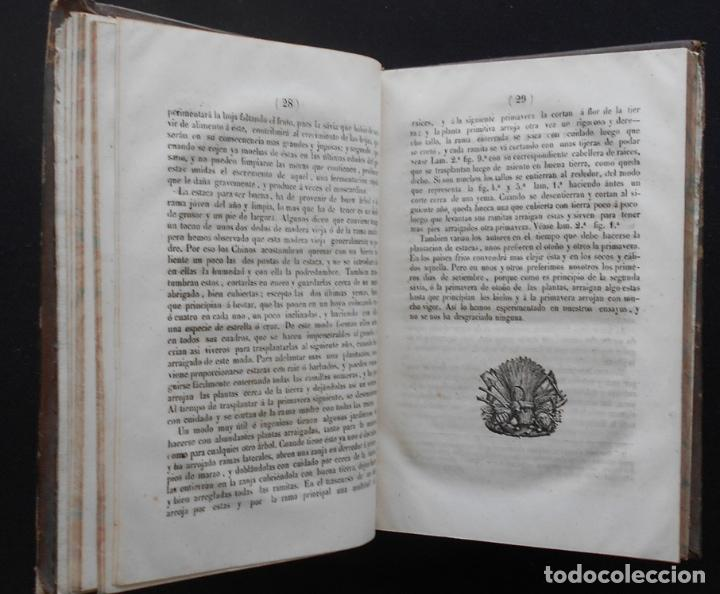 Libros antiguos: PCBROS - CULTIVO DE LA MORERA Y CRÍA GUSANO SEDA- VICTOR LANA -1847 IMP. LIT. EGAÑA - VITORIA - Foto 9 - 195385643